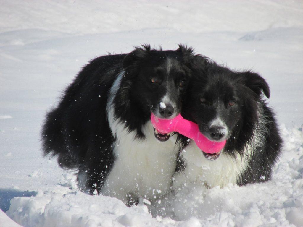 雪遊びする ジェム と メロ